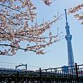 Photos: スカイツリーと桜とスペーシア