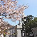 散る桜02