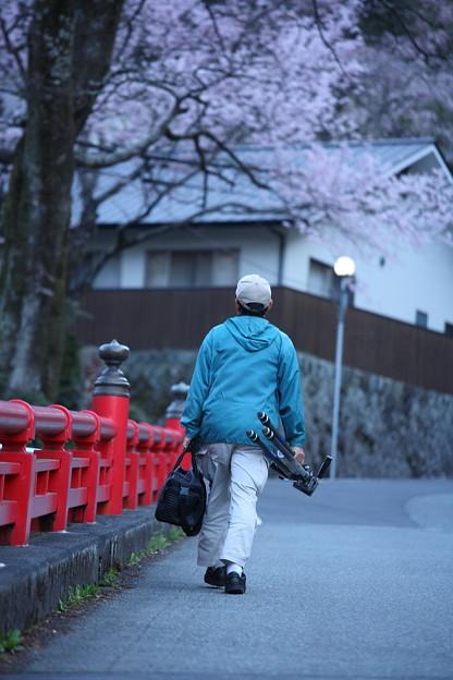 桜巡礼`12'(身延、久遠寺、桜と人編)-4