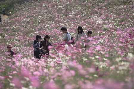 昭和記念公園(4)