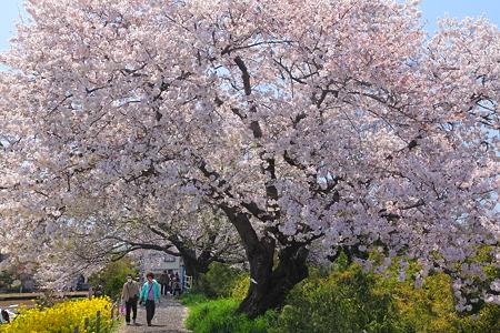 三川公園(8)