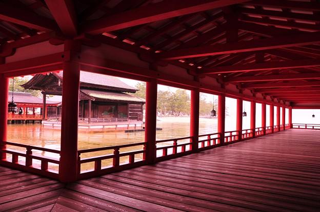 朝の雨降る満潮時の厳島神社内風景?