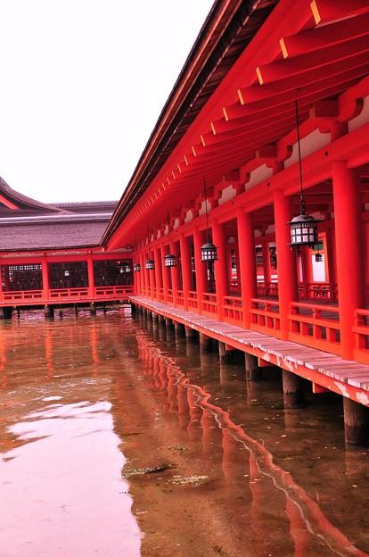朝の雨降る満潮時の厳島神社内風景?・・静寂な水面に映る