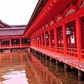 Photos: 朝の雨降る満潮時の厳島神社内風景?・・静寂な水面に映る