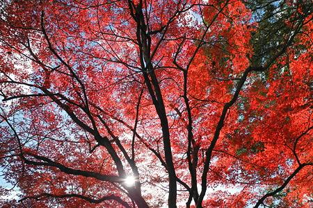 亀山公園の紅葉・7