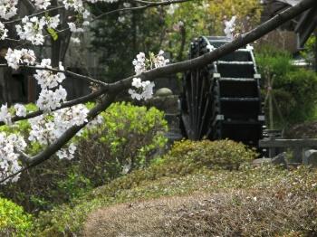 Photos: 水車と桜