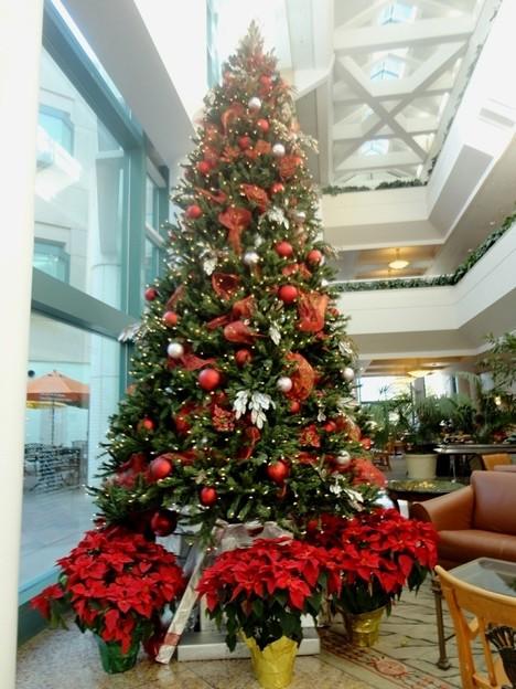 ChristmasTree@UCSDThorntonHospital-Dec2011