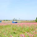 <荒川左岸*ポピー畑・風の足跡>