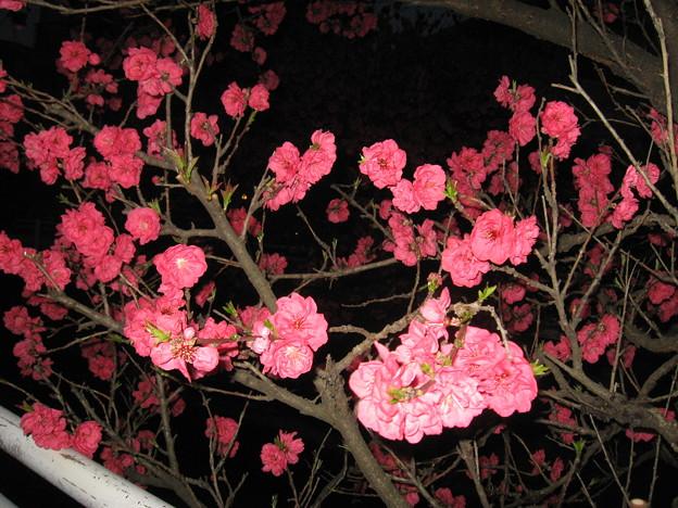 写真: この花は何?
