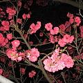 Photos: この花は何?
